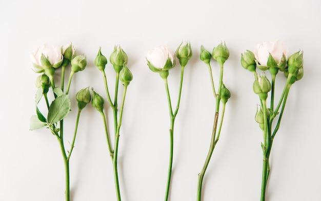 つぼみと緑の葉と花柄美しい小さなピンクのバラの最小限のフラットレイ構成