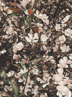 淡いピンクの春の花と緑の葉と花柄。春または夏のコンセプト