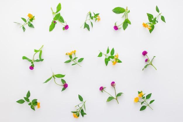ピンクのクローバーと白い背景の上の黄色の野生の花と花柄フラットレイトップビュー
