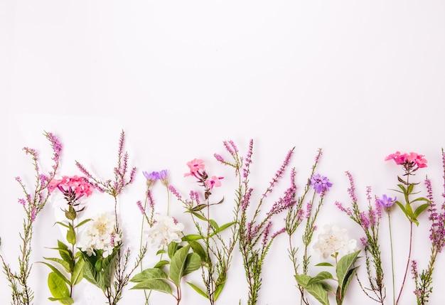 野花、緑の葉、白い背景の上の枝と花柄。フラットレイ、上面図。