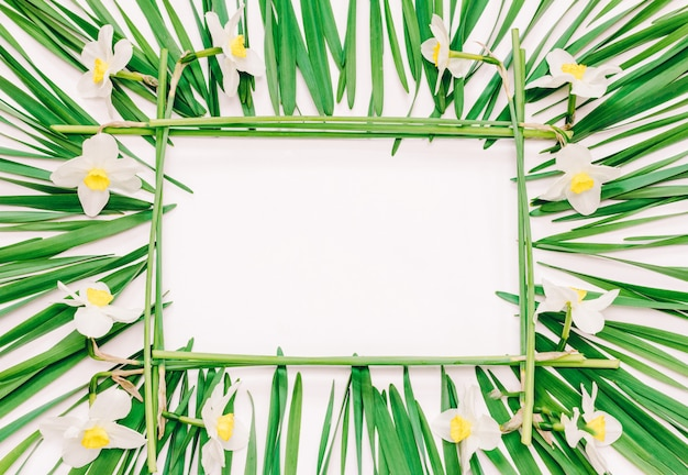 Floral rectangular frame of yellow flowers of daffodils and green leaves on white