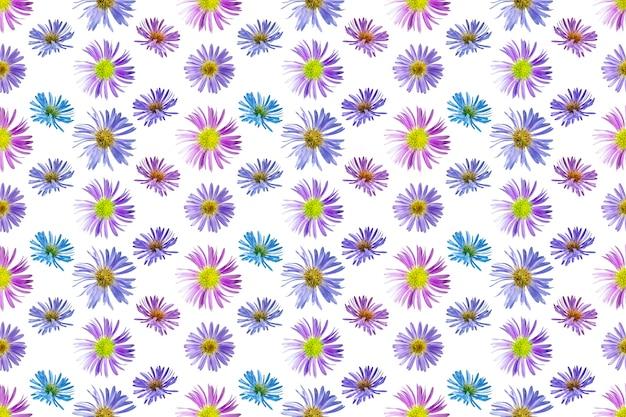Цветочный фон из цветов альпийской астры. белый изолированный фон. крупный план. макросъемка. концепция печати и дизайна.