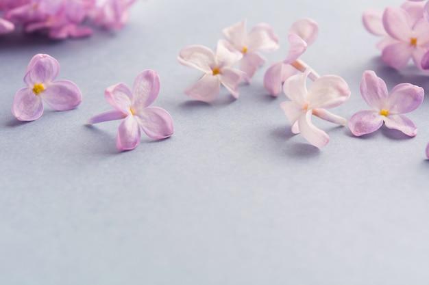 Цветочный весенний фиолетовый сиреневый арт-дизайн на сером фоне с копией пространства Premium Фотографии
