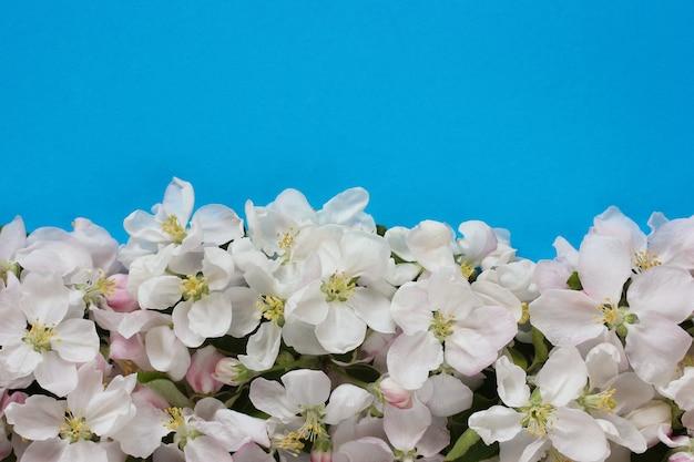 青い背景、上面図にリンゴの木の花と花のテクスチャ。自然な背景として白とピンクの花びらを持つ花序。