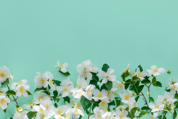 Floral wall. jasmine on a green wall with copy space, top view.