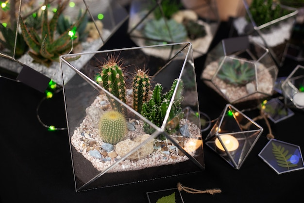 Florarium composition of cactus and succulents, stone and sand, element of interior, home decor, glass terrarium. glass florarium vase with succulent plants, cacti. small garden with home indoor plant