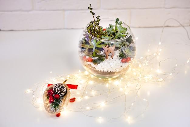 植物相-多肉植物、石、砂、ガラスの組成、インテリアの要素、家の装飾、クリスマスデラー、新年のプレゼント