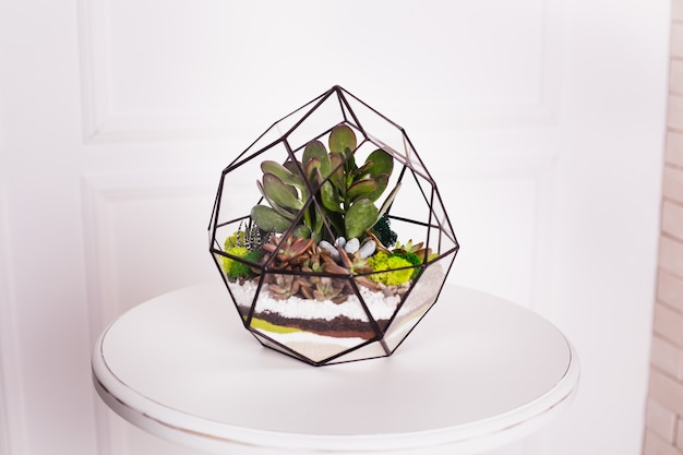 Florarium, composition of succulents, stone, sand and glass, element of interior,  home decor, glass terarium