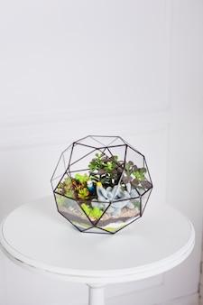 Florarium, composition of succulents, stone, sand and glass, element of interior,  home decor, glass terarium