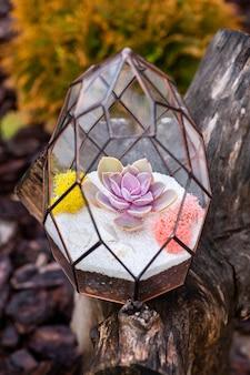 Florarium on the wooden stump