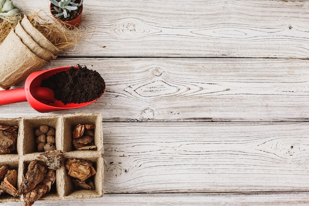 Florist concept. replanting beautiful succulents on wooden