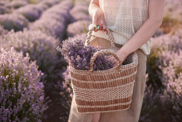 Florist pick flowers in straw bag. woman walk in lavender fields and find place for picnic
