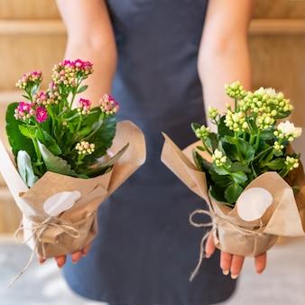 Флорист женщина держит каланхоэ, вдовий трепет