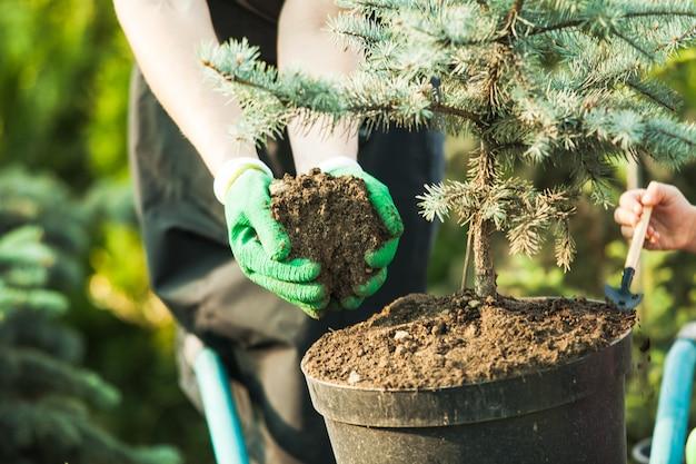 Floristwoman working with seedlings