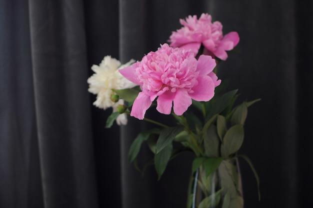 Цветущие пионы в вазе на темно-сером фоне. цветущий цветочный подарок с copyspace
