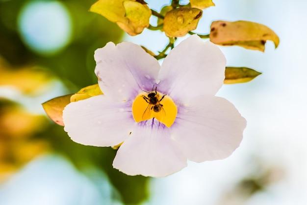 내부의 꽃가루를 먹고 사는 곤충이 있는 번성하는 꽃