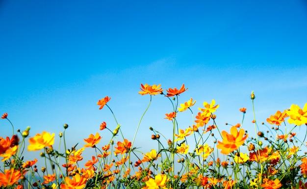 Flower against blue sky
