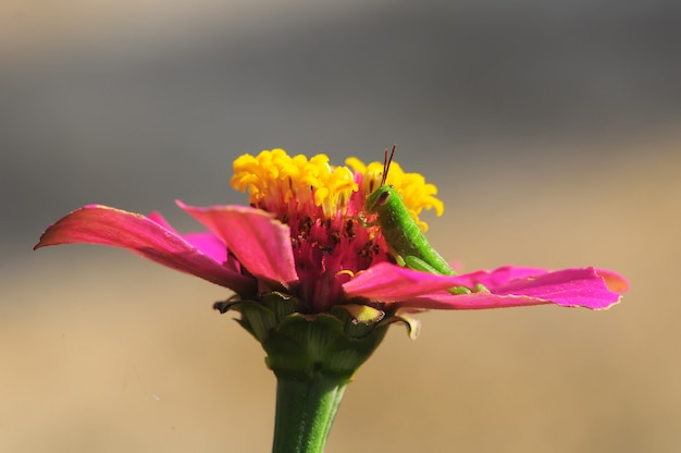 Цветы и кузнечик в саду