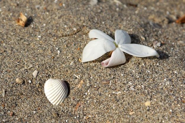 Цветок и ракушка на песке на пляже