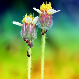 Flower and ant