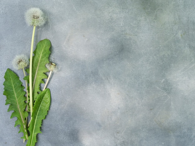 Flower arrangement of dandelions on a gray background.