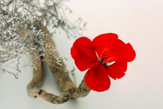 마른 식물의 꽃꽂이, 밝은 빨간색 제라늄 꽃이 튀어 나오는 매끄러운 나뭇 가지.