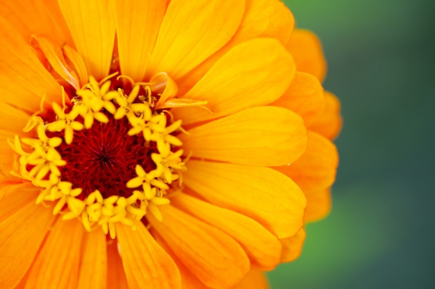 背景またはテクスチャとしての花