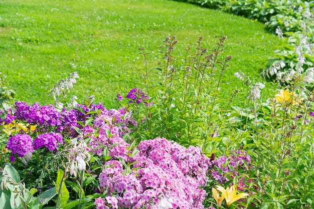A flower bed of phlox flowers against the backdrop of a green lawn.