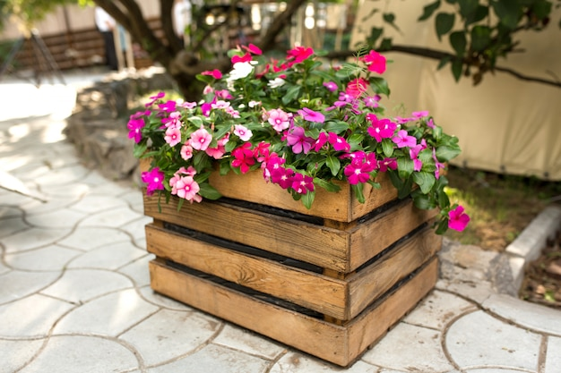 A flower bed with a beautiful pink and red flowers wooden box stands outdoors