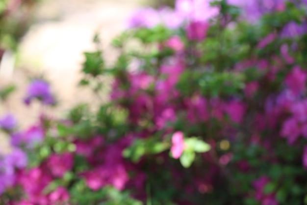 Клумба с яркими красочными цветами в ботаническом саду, несосредоточенная