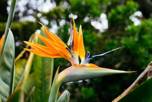 花鳥の楽園