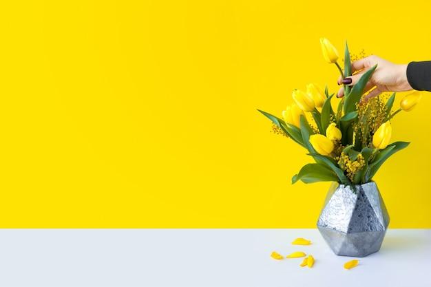 Букет цветов стоит в современной геометрической металлической вазе на белом столе. девушка вытаскивает рукой один цветок. желтые тюльпаны и ветви мимозы с зелеными листьями. яркий широкий баннер