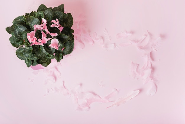 Flower bouquet with petals frame on pink background