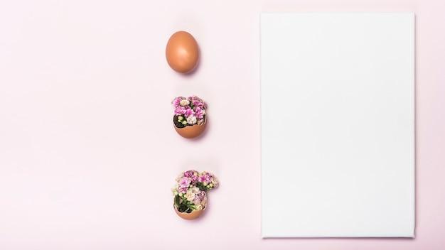 Flower in broken egg with paper