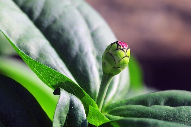 Цветочный бутон и зеленые листья в саду