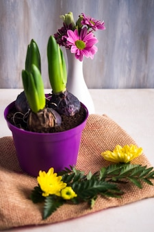 Flower bulbs growing in little pot near vase on burlap