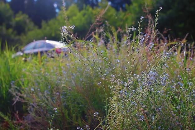 道路脇の花の茂み