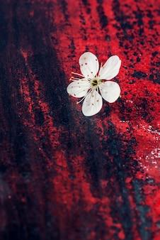 Flower of cherry tree