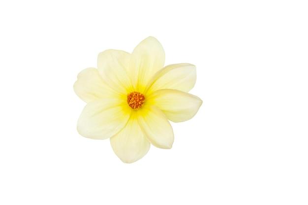Цветок крупным планом на белом фоне