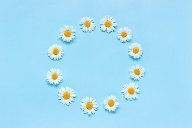 Flower composition. frame floral round wreath of flowers chamomile on blue background