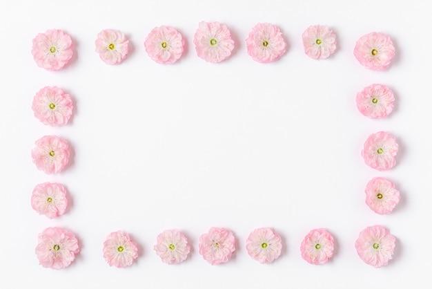 花の組成。白い背景で隔離のピンクの桜の花で作られたフレーム。フラットレイ。上面図。結婚式、バレンタインデー、女性の日のコンセプト