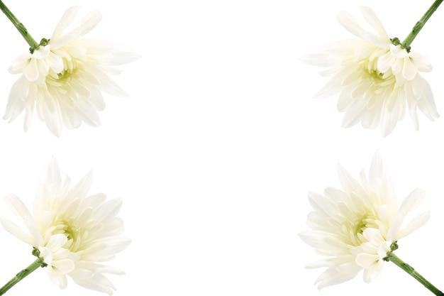 花の組成。白い背景の上の白い菊のフレーム