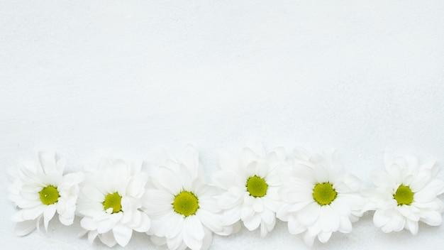 白い背景の花の構成