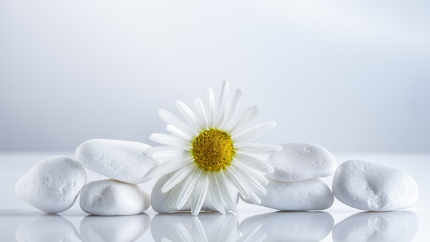 Flower daisies on a white stones pyramid for spa concept, or chamomile tea.