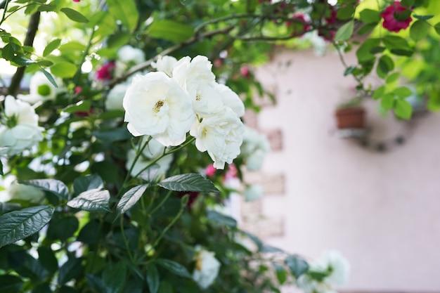 家の庭の壁に掛かっている花の装飾