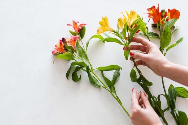 꽃 배달. 플로리스트 흰색 배경에 alstroemeria 꽃다발을 조립.