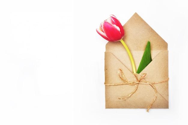 Flower in envelope on white