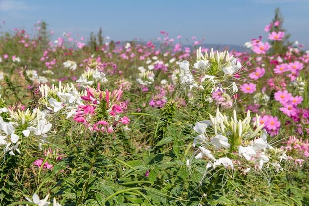 背景の美しい花畑、春の季節の花の暖かいトーン