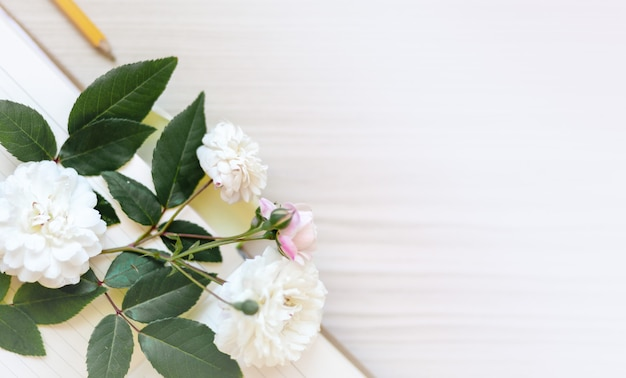 花のフレーム、バナー。柔らかな白とベージュの背景にピンクのバラの繊細なカード。テキスト用のスペース。