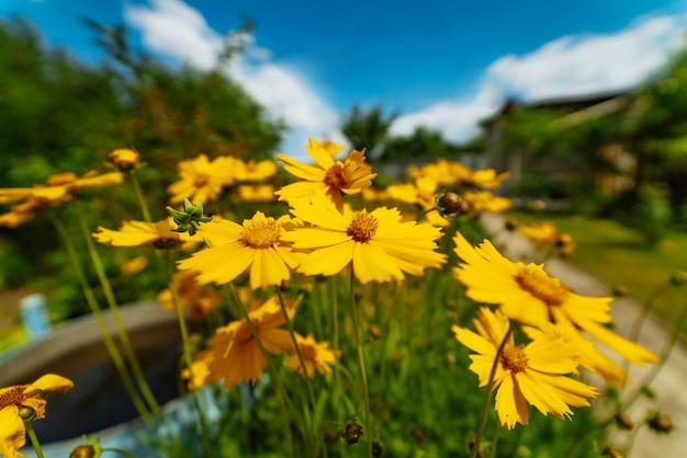 Цветочный сад фокус крупным планом